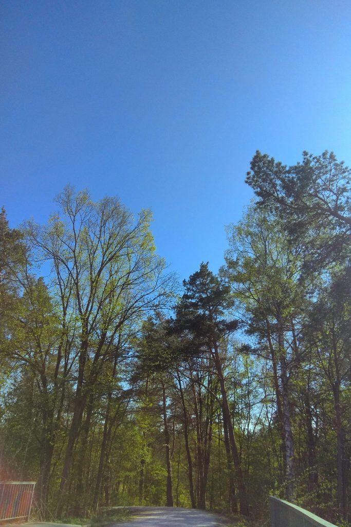 Ihličnatý zelený les s modrou oblohou počas behu