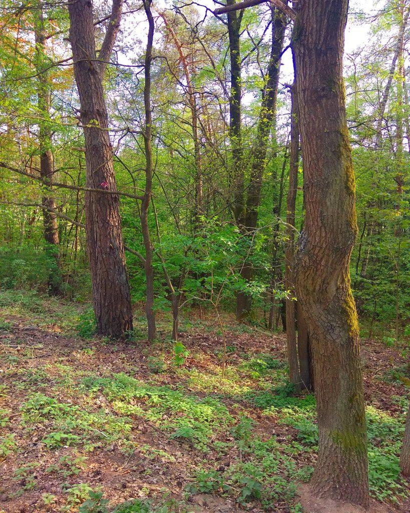 Zemité farby, hlinená pôda v lese a kmene stromov počas behu